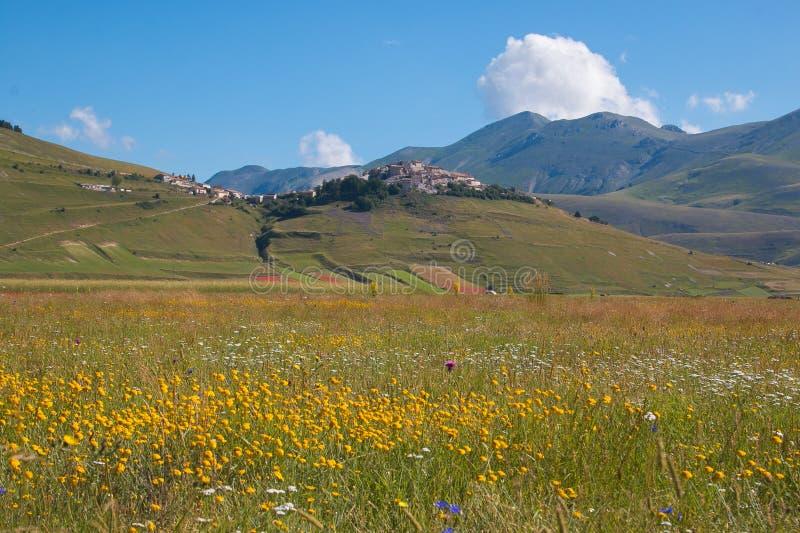 Punto di vista idilliaco di Castelluccio di Norcia con i fiori nella stagione estiva immagine stock libera da diritti