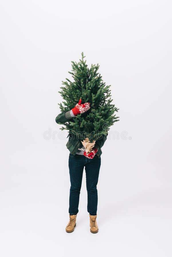 punto di vista oscurato della persona in maglione e guanti di inverno che tengono l'albero di abete in mani isolate su bianco immagini stock libere da diritti
