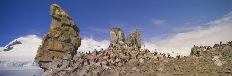 Punto di vista panoramico dei pinguini di sottogola (pygoscelis antarctica) fra le formazioni rocciose sull'isola della mezza lun fotografia stock