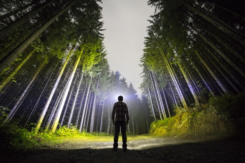 Punto di vista posteriore dell'uomo con la condizione capa della torcia elettrica sulla strada di messa a terra della foresta fra fotografia stock libera da diritti
