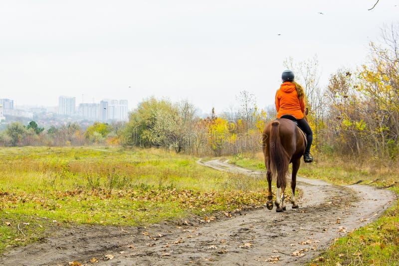 Punto di vista posteriore della donna sul cavallo immagine stock