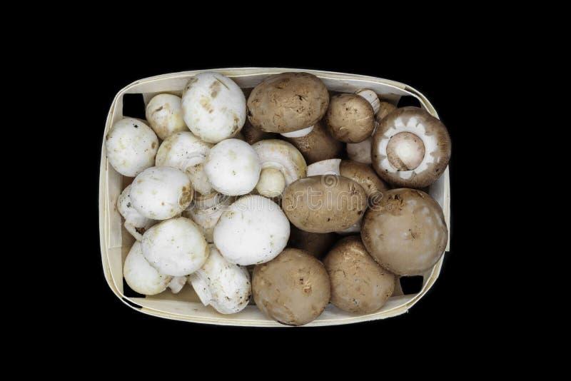 Punto di vista superiore dei funghi marroni e bianchi dei funghi prataioli disposti in canestro di legno ed isolati su fondo nero fotografie stock