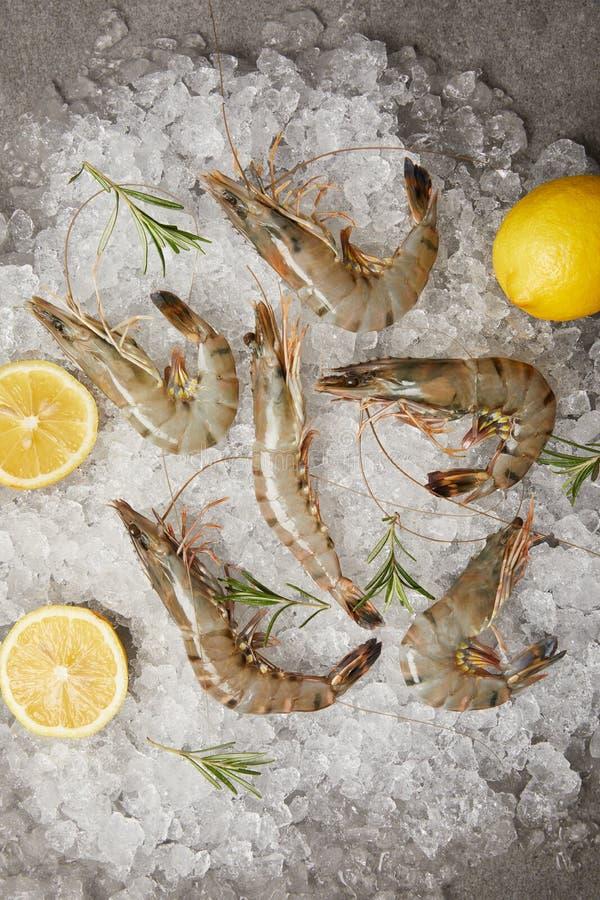 punto di vista superiore dei gamberetti crudi con le fette del limone e dei rosmarini su ghiaccio tritato immagini stock