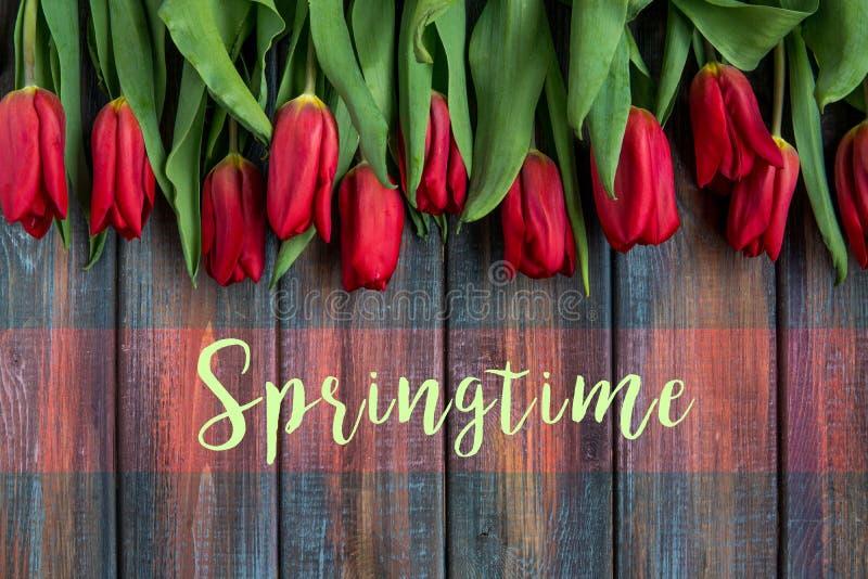 Punto di vista superiore dei tulipani rossi con il testo di primavera fotografia stock libera da diritti