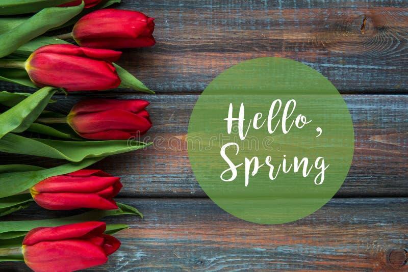 Punto di vista superiore dei tulipani rossi con il testo di primavera immagine stock