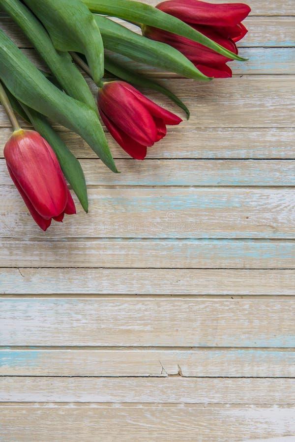 Punto di vista superiore dei tulipani rossi con lo spazio della copia fotografia stock libera da diritti