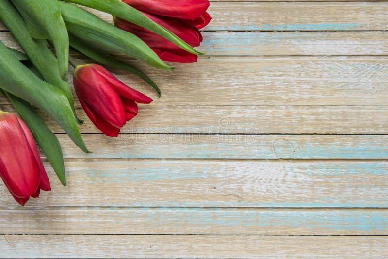 Punto di vista superiore dei tulipani rossi con lo spazio della copia immagine stock