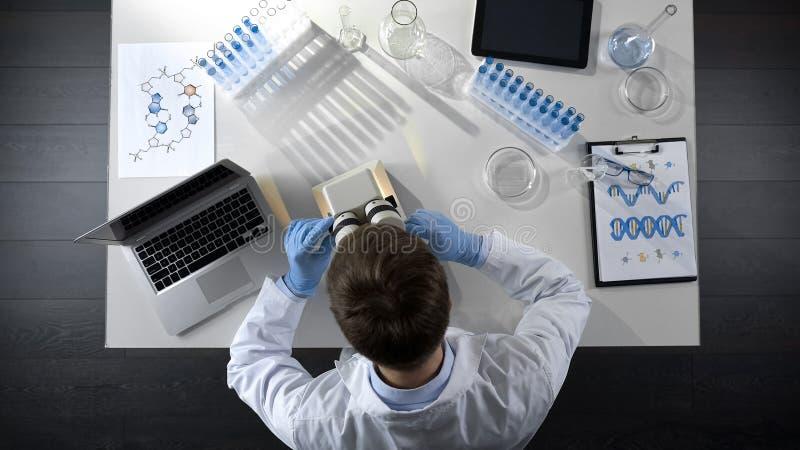 Punto di vista superiore del tecnico di laboratorio che esamina campione pronto sotto il microscopio fotografia stock libera da diritti