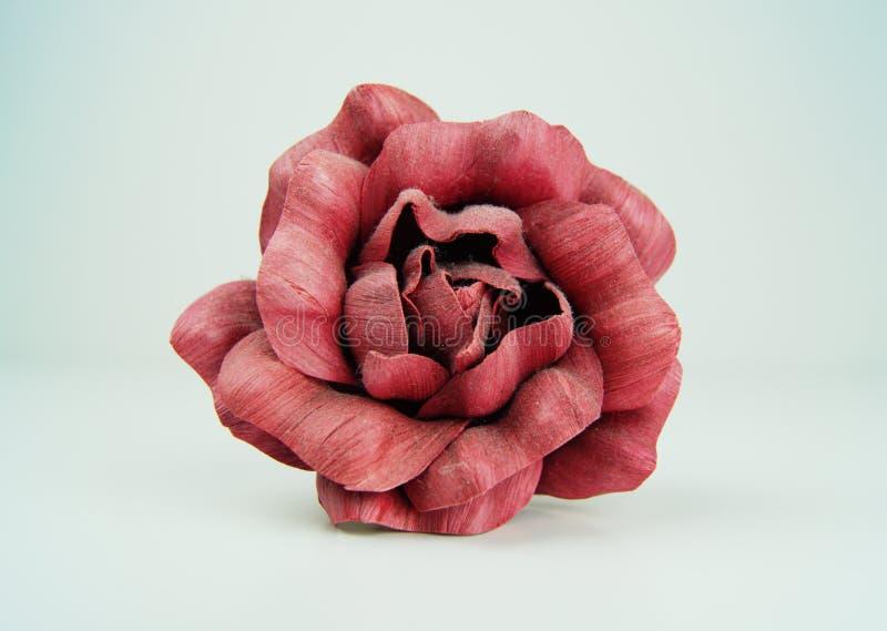 Punto di vista superiore della rosa rossa fotografie stock