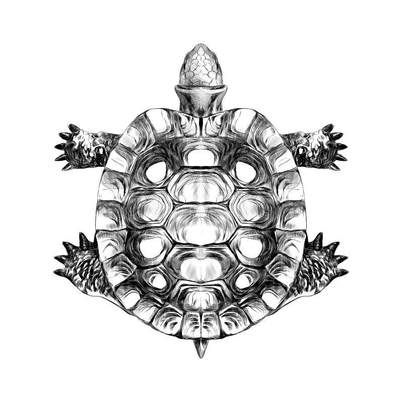 Punto di vista superiore della tartaruga, vettore strisciante di schizzo della corazza illustrazione vettoriale