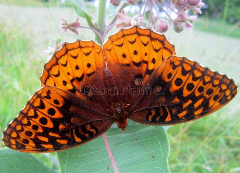 Punto di vista superiore di una farfalla immagini stock