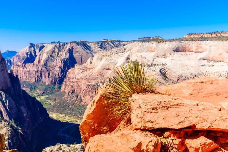 Punto di vista di Zion Canyon nell'Utah fotografia stock libera da diritti