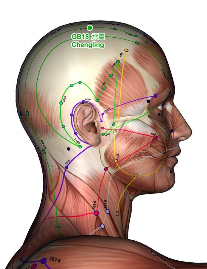 Punto GB18 Chengling, di agopuntura illustrazione 3D fotografie stock libere da diritti