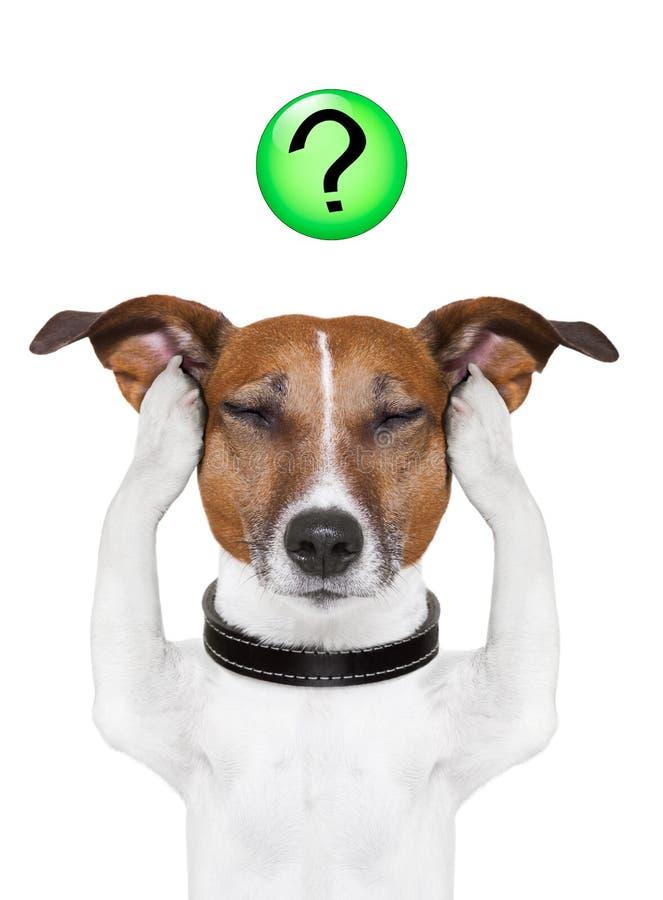 Punto interrogativo del cane immagini stock libere da diritti