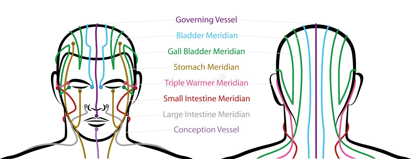 Puntos principales masculinos de la acupuntura de los meridianos libre illustration