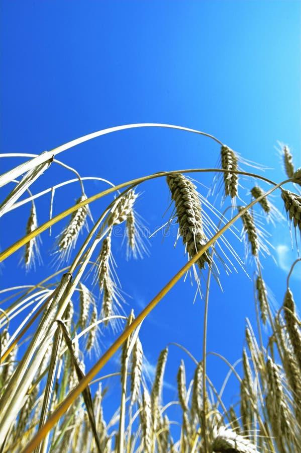 Download Puntos y cielo azul foto de archivo. Imagen de punto, rayo - 1280846