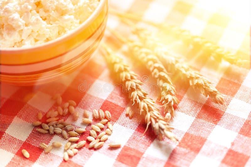 Puntos y comida del trigo imagen de archivo