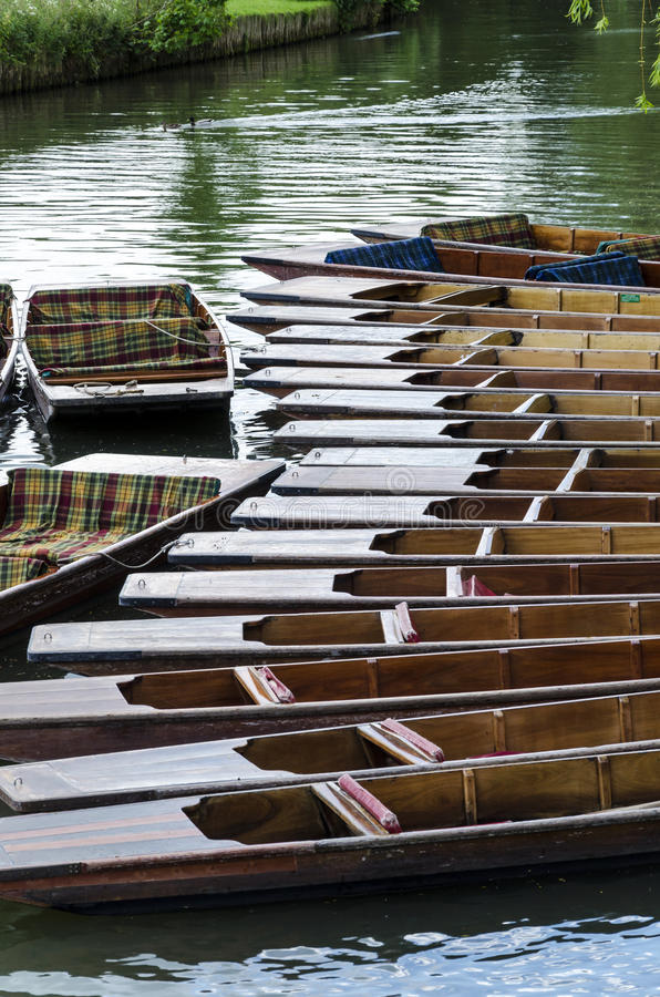 Punts in River Cam 2. A lot of punts tied together on a dock. This is located in river Cam that runs through the city of Cambridge royalty free stock images