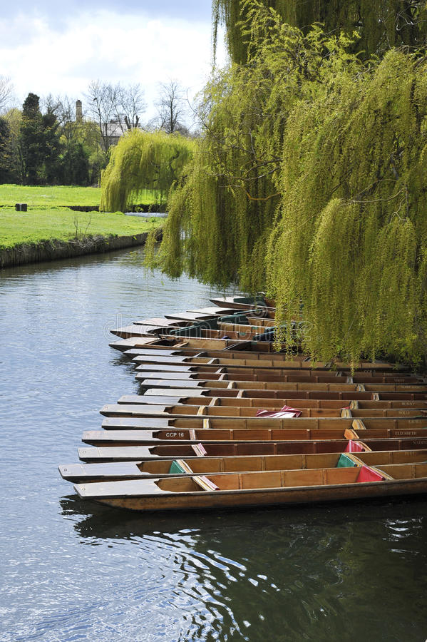 Punts and willow. Tied up wooden Punts underneath a willow tree on a river in Cambridge royalty free stock photos
