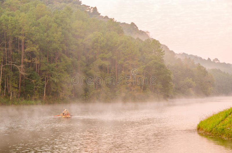 Punzada-ung, bosque del pino fotografía de archivo libre de regalías