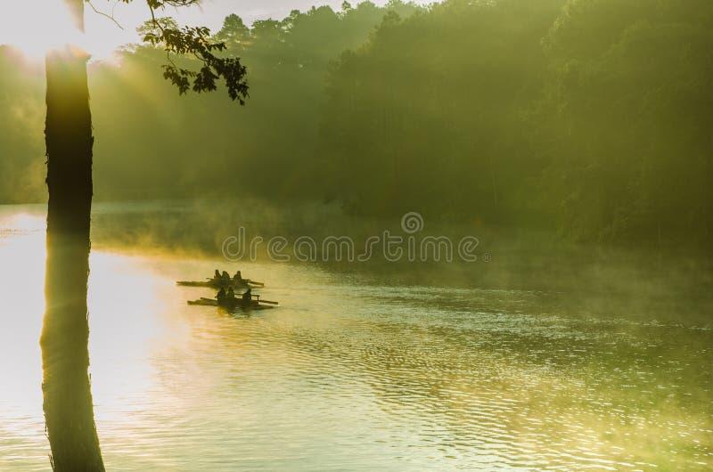 Punzada-ung, bosque del pino imágenes de archivo libres de regalías