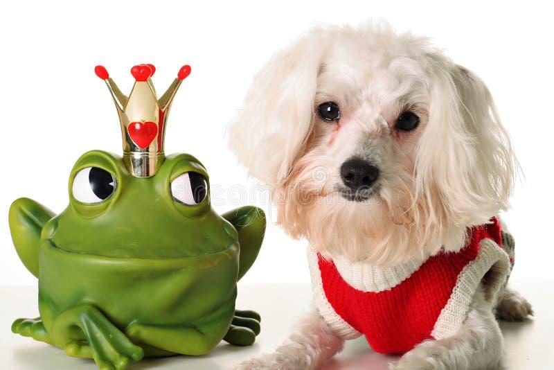 Pup incantare di principe fotografie stock libere da diritti