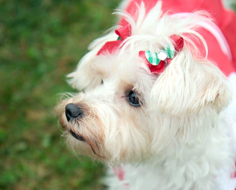 Pup operato fotografie stock libere da diritti
