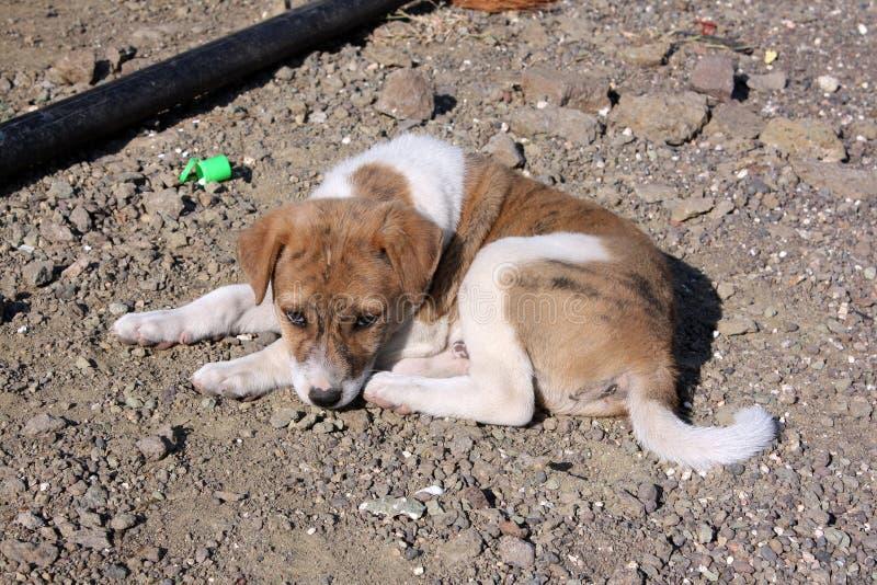 Pup solo immagine stock libera da diritti