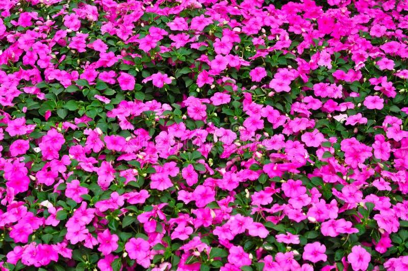 Puple flowers stock photography