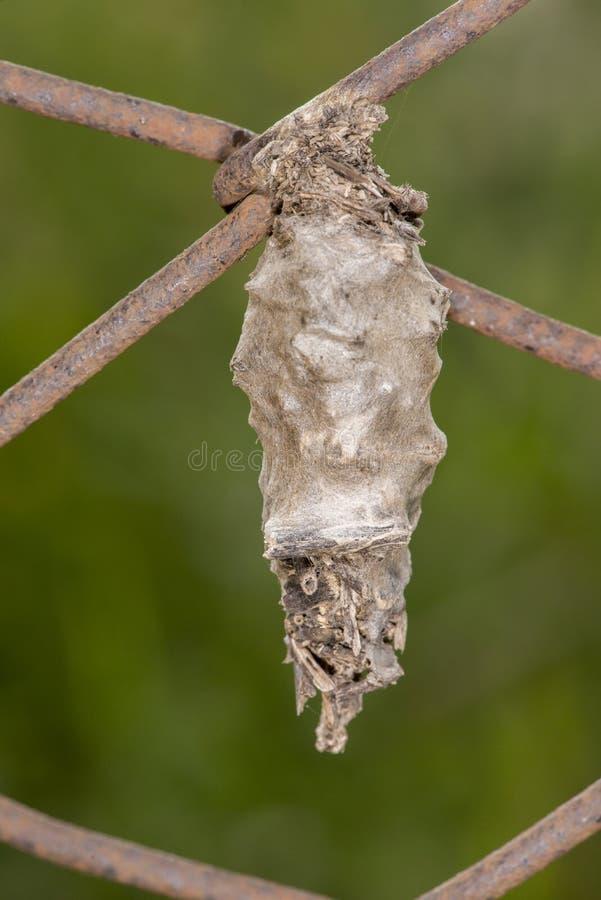 Bagworm stockfotografie