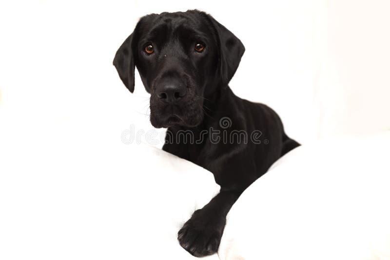 Puppie stock images