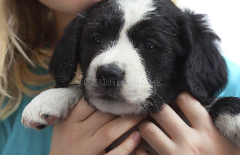 Puppie on white background stock photos