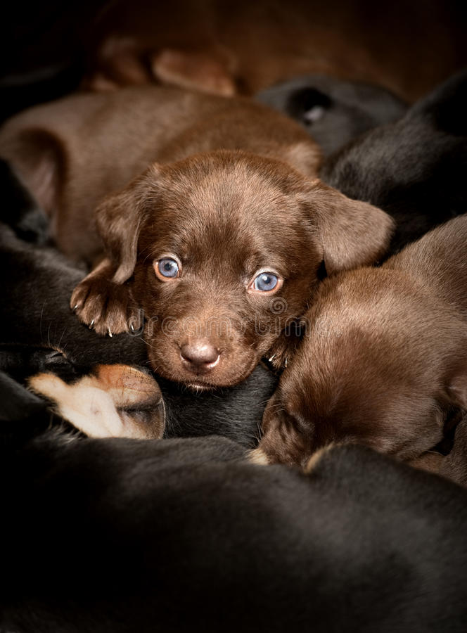 Download Puppies Stock Images - Image: 12648334