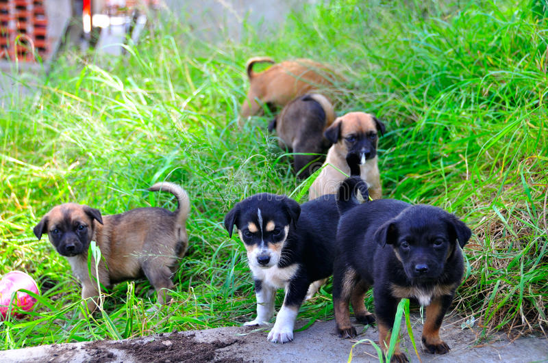 Download Puppies stock image. Image of adorable, pack, breed, puppies - 16747917