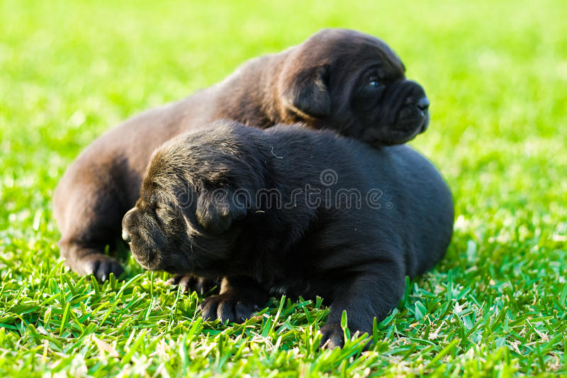 Download Puppies stock photo. Image of lying, lonely, happy, blue - 9426534