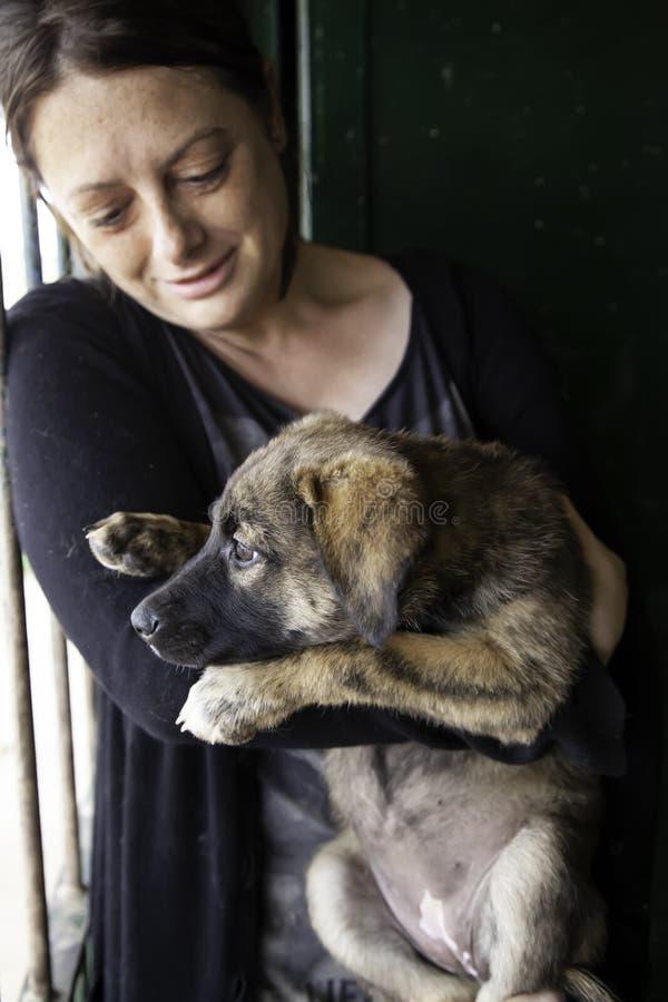 Puppies abandoned dog stock photo