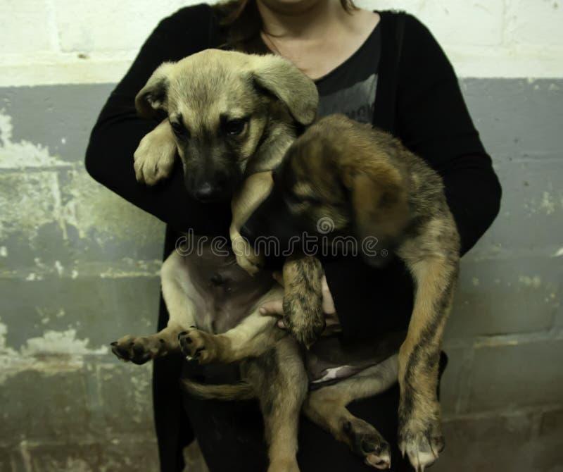 Puppies abandoned dog royalty free stock photo