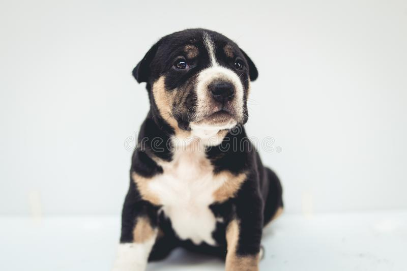 Puppies dog crossbred cute dog isolated. My Puppies dog crossbred cute dog isolated stock photos
