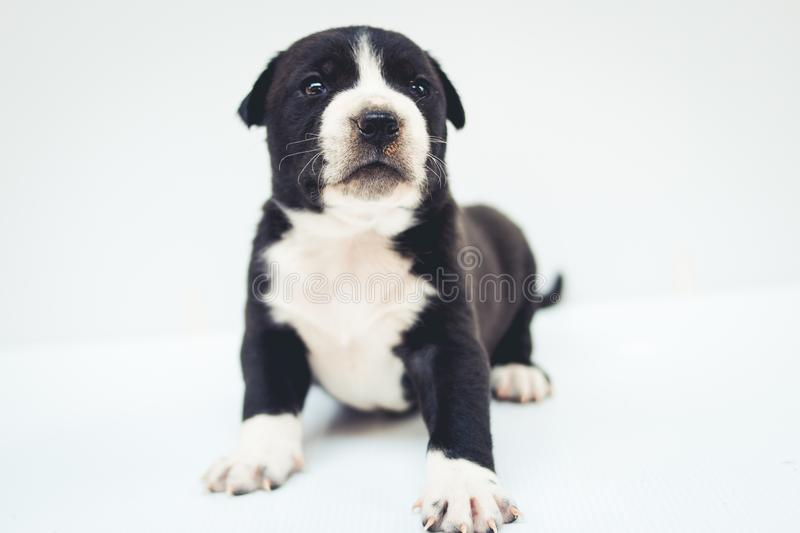 Puppies dog crossbred cute dog isolated. My Puppies dog crossbred cute dog isolated stock photo