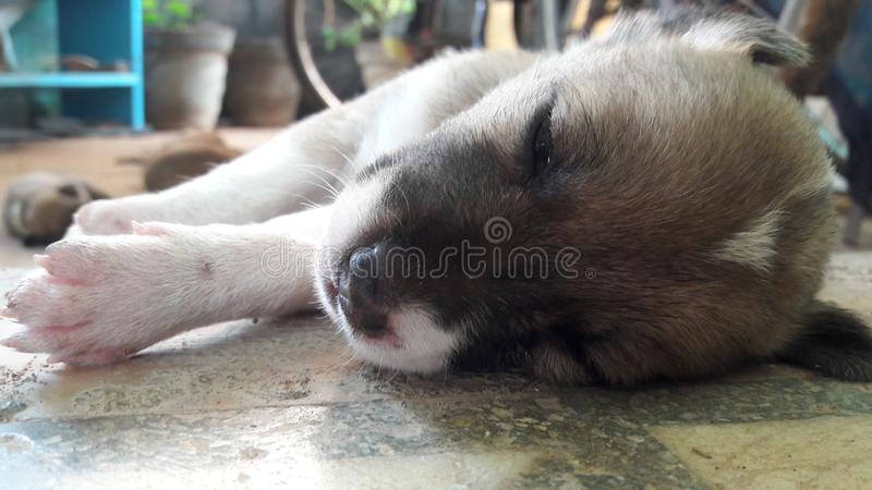 Puppies dogs royalty free stock photo