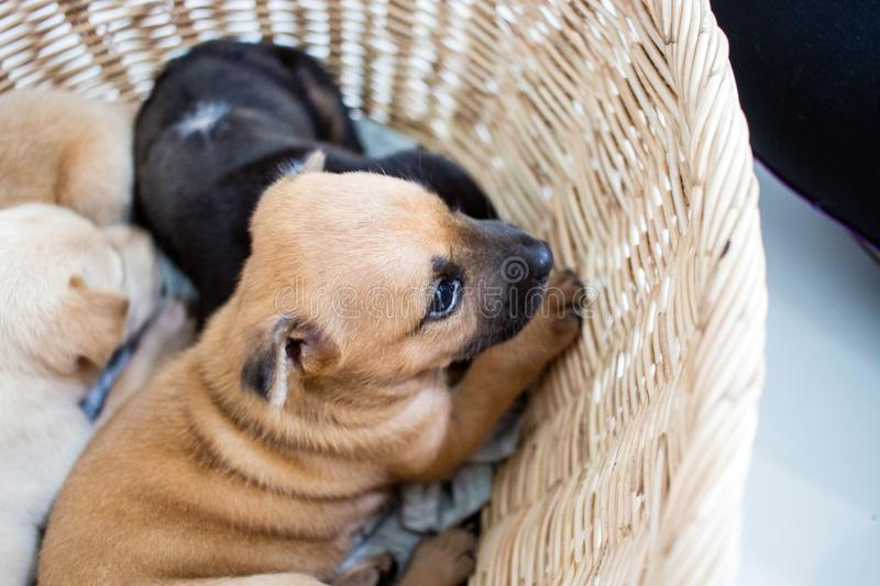 Puppies are excited royalty free stock image