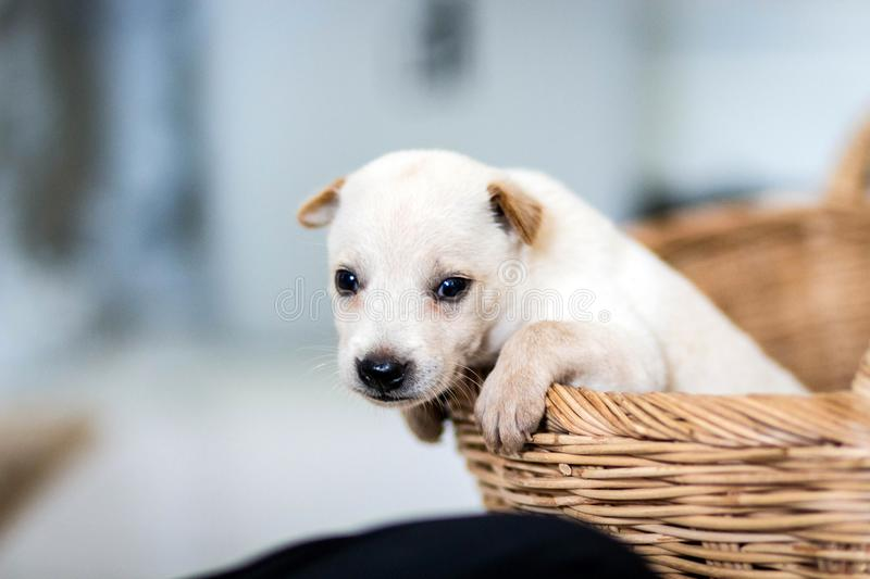 Puppies are excited. To be moving to a new home royalty free stock image