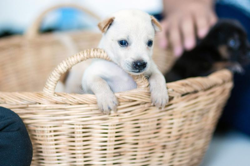 Puppies are excited to be moving to a new home. stock images