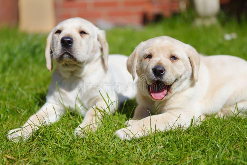 Puppies in the garden stock photos