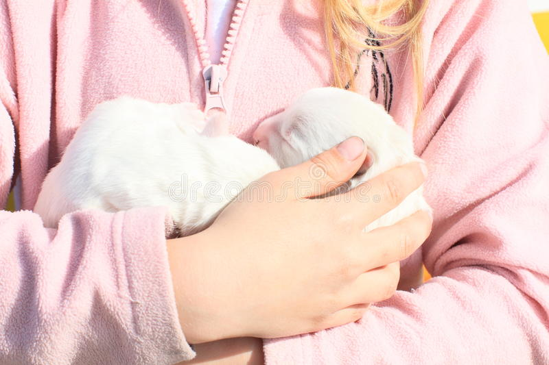 Puppies holded in kids hands. Two white little puppies holded in hands of a little girl in pink royalty free stock photo