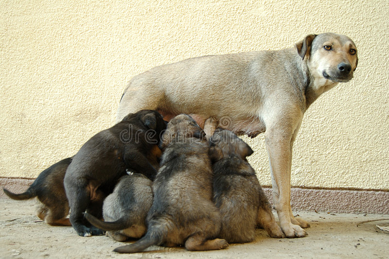 Puppies with mother stock images