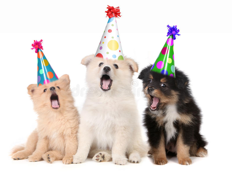 Puppies Singing Happy Birthday Song. Humorous Puppies Singing Happy Birthday Song Wearing Silly Hats royalty free stock image