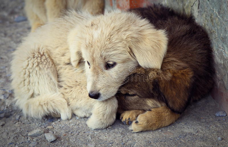 Puppies. Small home less puppies outdoors stock images