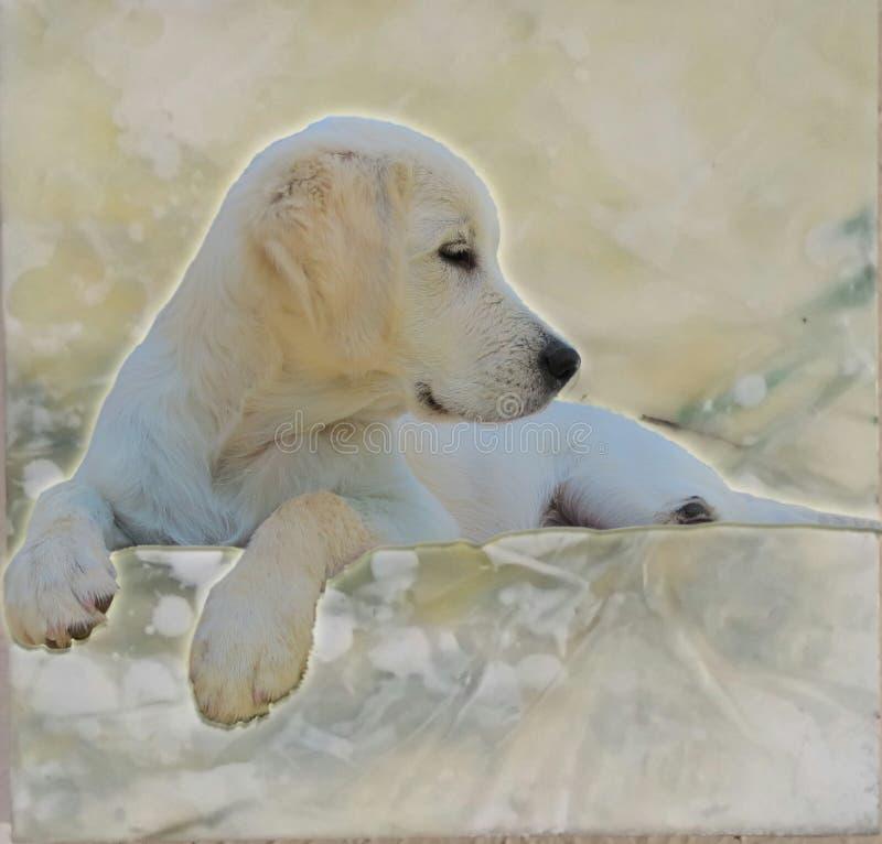 Puppy& x27; мир s золотой стоковые изображения rf