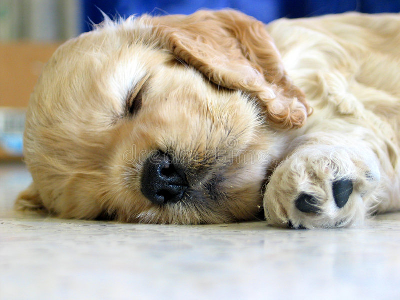 Download Puppy stock photo. Image of young, rest, pretty, puppy - 102362